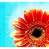 ulybchivaya: (цветок)