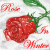 "rose_in_winter: A rose on a field of snow, and red text stating ""Rose in Winter"" (Rose in Winter)"