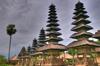 settler: (Bali)