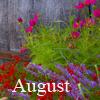 biggelois: (augusti)