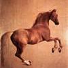 mielga: (лошадь)