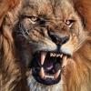 macarawr: (lion)