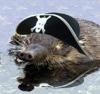 huholya: (pirat)