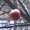 tanya45: (winter apple)