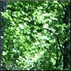 curiosity: A blend of green foliage with a few streaks of dark colors. The forest is a blur of life. (Picto : Green Curtain)
