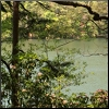 curiosity: The lake is framed by dark branches on the top and a thick trunk on the left. Honeysuckle fills the bottom. (Picto: Lake Frame)
