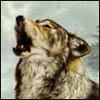 akelych: (wolf singing)