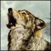 akelych: (wolf singing)