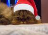 rina_rina: (Бася- Новый Год!)