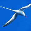 revolutions: A seagull in flight, against a blue sky. (flight)