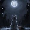 lunavelata: (cat)