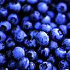 panda: photo of blueberries (food: blueberries)