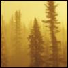 tamarack: (Black Spruce Sunrise Fog)