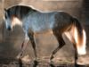aranel_89: Beautiful (Horse)