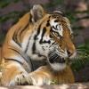 tigger_odyn: (Добрая тигра)