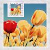 eunice: (tulips)