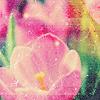 eunice: (pink)