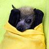 xraytheenforcer: (bat)