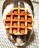 lurkitty: (bunny waffle)