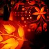 fleurdesang: (orange)