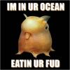 deirdre: (octopus)