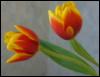 sashkin2000: (цветочки)
