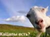 teannate: (Кацап)