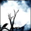 tamarack: (Crow with Moon)