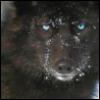 tamarack: (Wolf Stare)