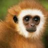 trickshaveaprice: (Monkey)