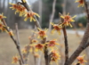 lapochka99: (весна)