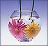 sitella: (аквариум)