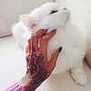 alwayswondered: A woman's tattooed hand stroking a fluffy white cat. (Default)