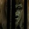 commandshumor: (Caged beast)