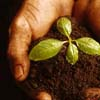 seedkeeper: (plant in hands)