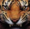 timatkov: (tiger)
