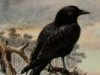 paganaidd: Blackbird stares into the distance (Blackbird Rise)