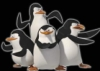 navado: (Pinguins F1)