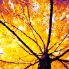 persona_non_grata: (tree)