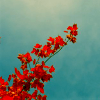 persona_non_grata: (red flowers)