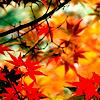 denpagirl: (Autumn Leaves)