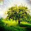 denpagirl: (Magic Tree)