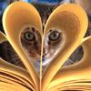 sulien: (Reading)