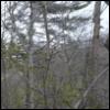 unfavorableinstigation: Foresty background (Forest)