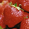 neckarhex: Close shot of strawberries. (delicious)