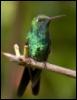 uchitel_2009: (птичка)