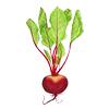 ext_13513: a beet root (Beet)