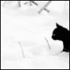 subst: (cat and snow)