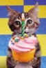 rebooted: (Birthday kitty)