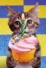 rebooted: (Birthday kitty)